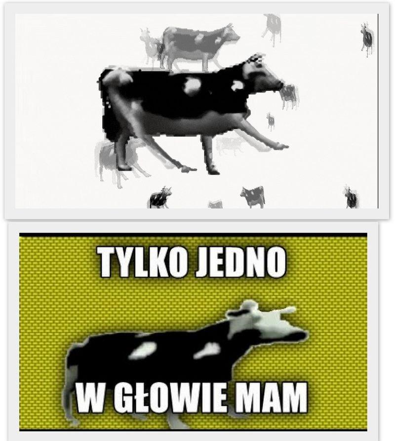 Корова танцует под польскую музыку
